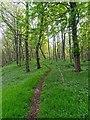 NC8400 : Path through Dunrobin Castle woodland by valenta