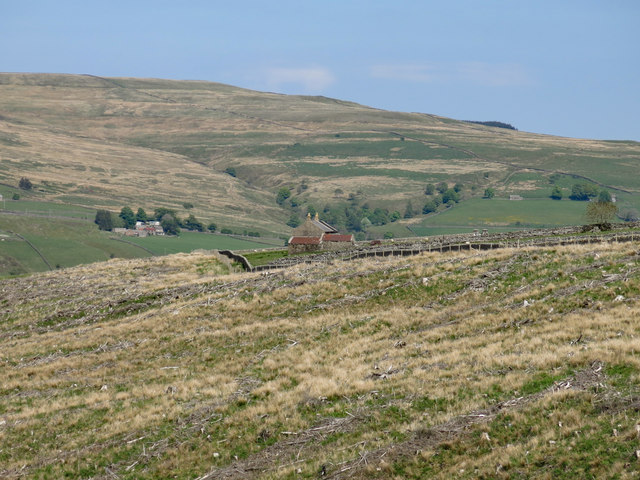 Clear-felled plantation between High Whinsike and The Rigg
