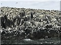 NU2337 : Seabird colony on Brownsman by Jonathan Hutchins