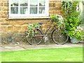 SP3944 : The bicycle as planter by Oliver Dixon