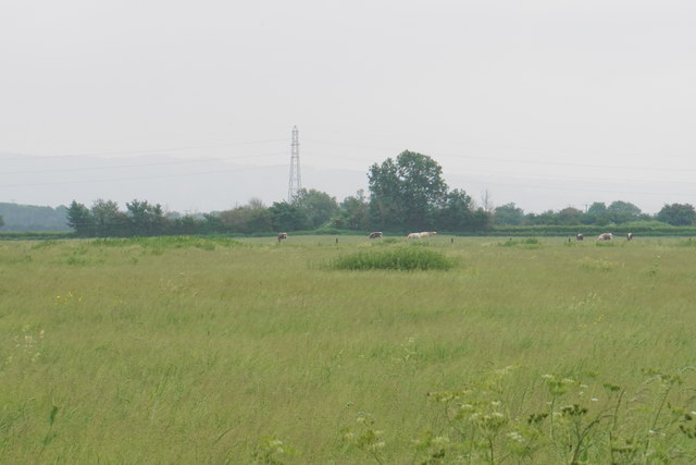 Long grass and grazing land