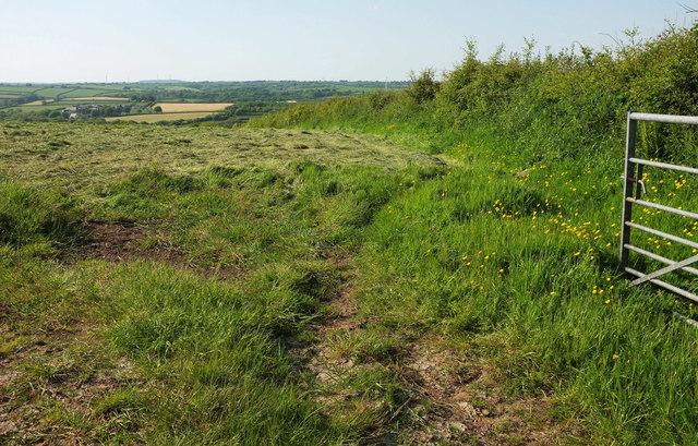 Field near Pennicknold