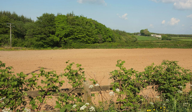Justment Plantation