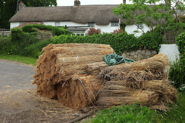 Thatching straw, North Bovey