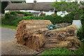 SX7483 : Thatching straw, North Bovey by Derek Harper