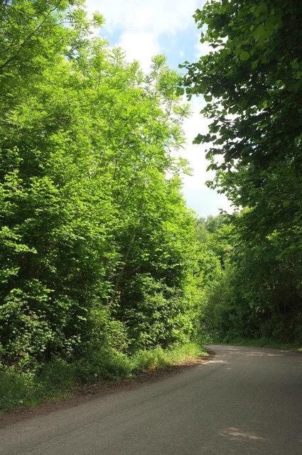 Lane approaching Peartree junction