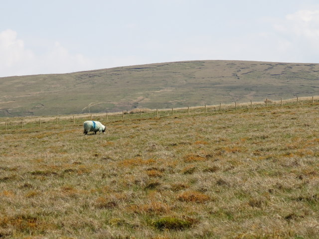 Rough pastures south of Far High House