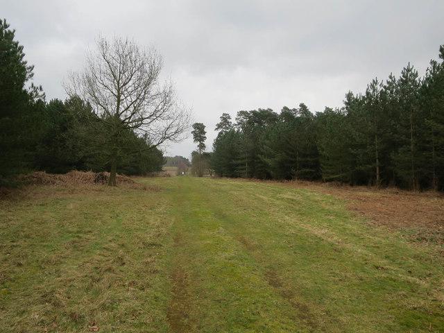 Track to Ickburgh Fields
