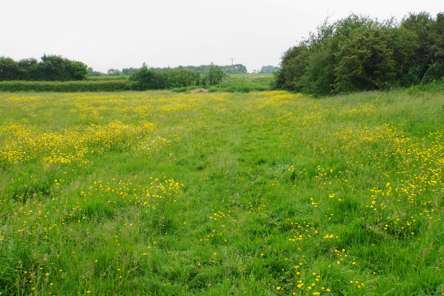Restricted byway through a field of buttercups