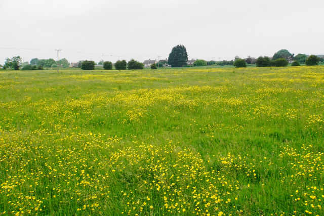 A field of buttercups near Hardwicke