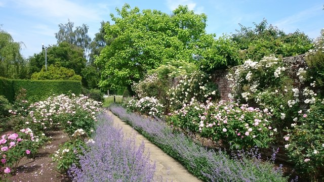 The rose walk at Dunsborough Park