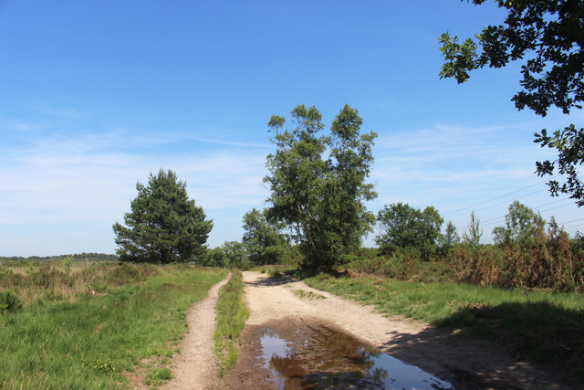 Sandy Track on Chobham Common