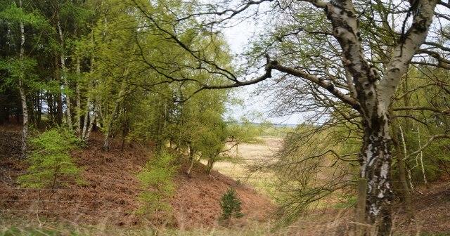 Wooded slope, Sandringham Warren