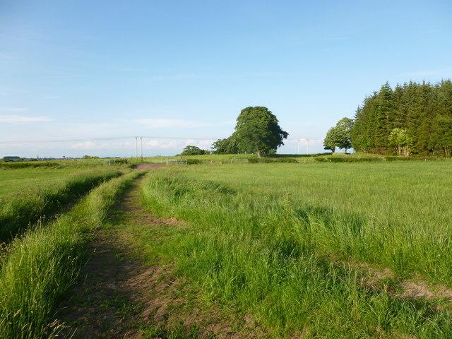 Farm track near Greenhead