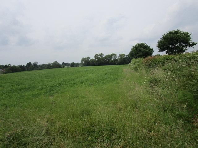 Field near Lower Boulsdon