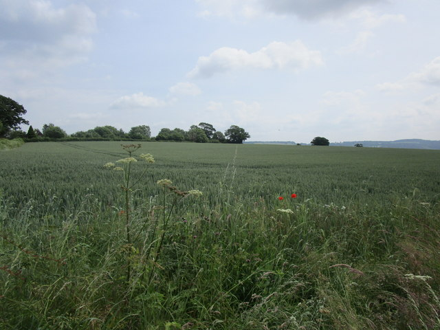 Wheat field near Brinkley Hill