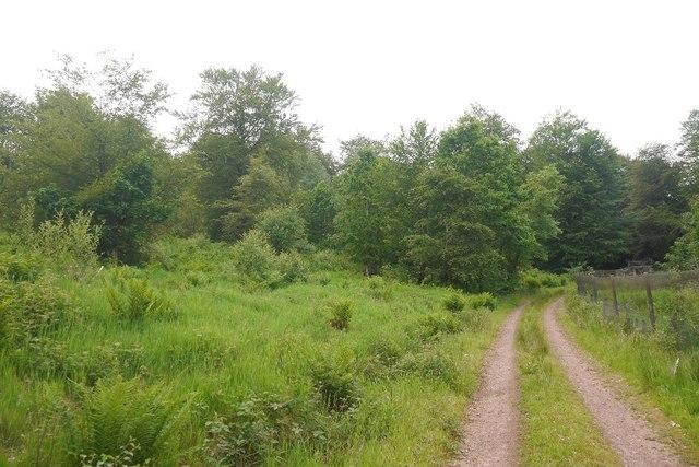 Estate road, Rig Plantation