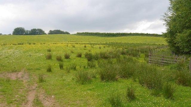 Field, High Farthingbank