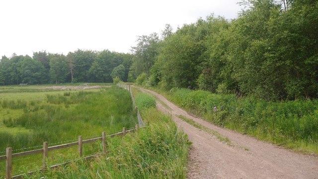 Road past Farthingbank Loch