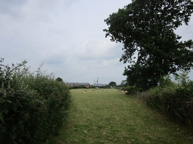 Grass field with sheep, Strangford