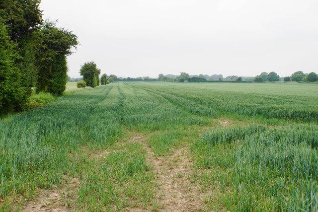 Wheat field near Elmstone Hardwicke