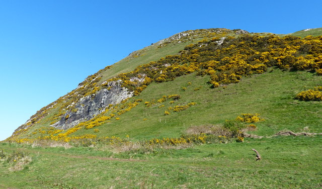Gorse covered slopes on the North Berwick Law
