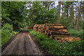 TQ0949 : Log piles by Ian Capper