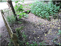 TQ2479 : Shallow ditch in woodland, Holland Park rainwater conservation by David Hawgood