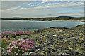 L5854 : Sea pinks, Claddaghduff, Leagaun by Mick Garratt