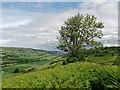 NH5158 : Tree on the Knock Farril ridge : Week 24