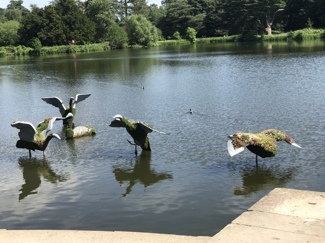 Steel swans at Trentham Gardens