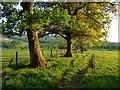 NY1633 : Pasture, Blindcrake by Andrew Smith