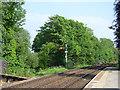 SD4678 : Arnside station - up starter signal by Stephen Craven