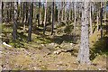 NN5859 : Old boundary on Aulich Hill by Richard Webb