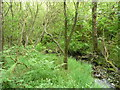 SE0413 : The valley floor in Drop Clough, Slaithwaite by Humphrey Bolton