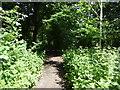 TQ0977 : Woodland in Cranford Countryside Park by Marathon