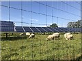 SJ5004 : Solar and sheep farming by Jonathan Hutchins