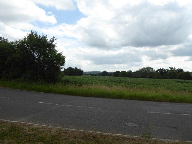 View across fields near Great Baddow, Essex