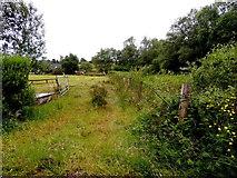 H5672 : An open field, Mullaghslin Glebe by Kenneth  Allen