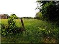H5671 : Grass, Bracky by Kenneth  Allen