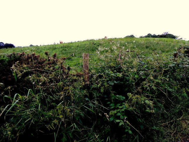 A low hill, Bracky