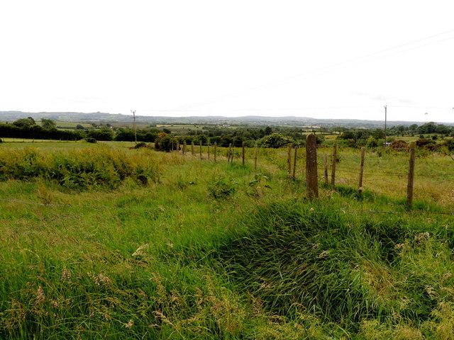 Grassland, Mullaghslin Glebe