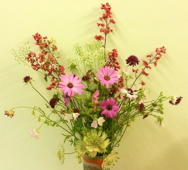 A collection of wild and cultivated flowers