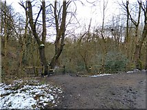 SJ9594 : Entrance to Gower Hey Wood by Gerald England