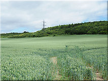 TL0420 : Wheat field on north side of Dunstable Road by Trevor Littlewood