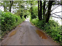 H5559 : Damp along Tycanny Road by Kenneth  Allen