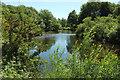 SE3273 : River Ure near Hutton Conyers by Derek Harper