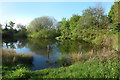 SP2567 : Pond at Turkey Farm by Des Blenkinsopp
