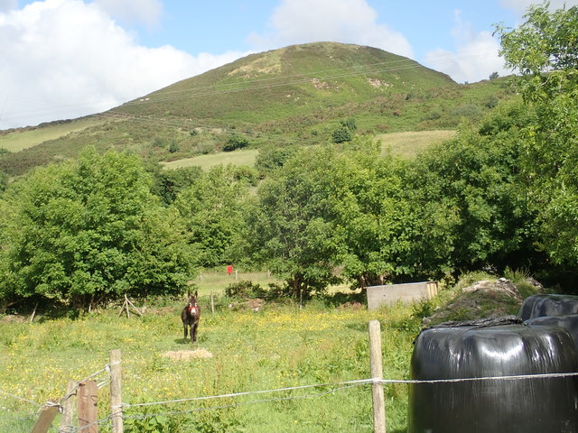A vocal donkey in the shadow of the Sugar Loaf Hill