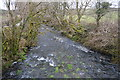 SX5367 : River Meavy by N Chadwick